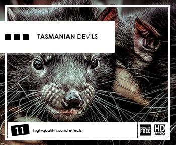 tasmanian-devils-album