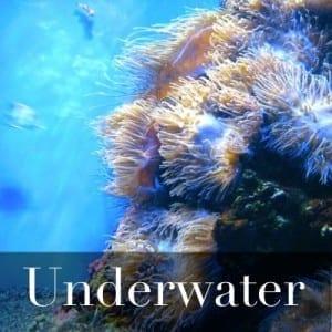 Underwater - Square