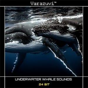 underwater-whales