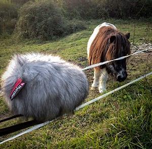 pony-sounds