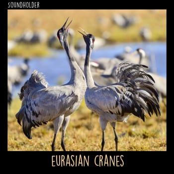 EurasianCranes_CoverASFX