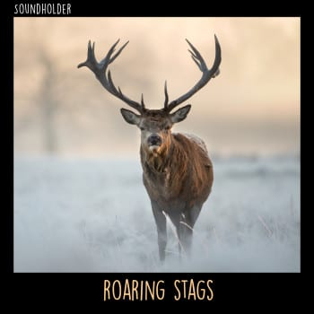 RoaringStags_CoverASFX