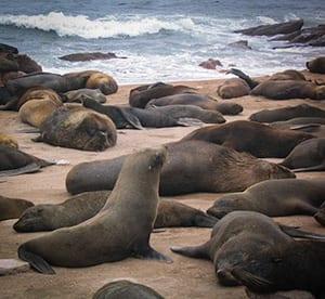 marine-mammals